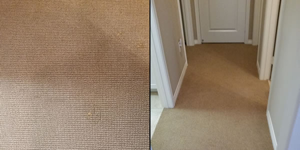 Bleach Stain Removal Carpet