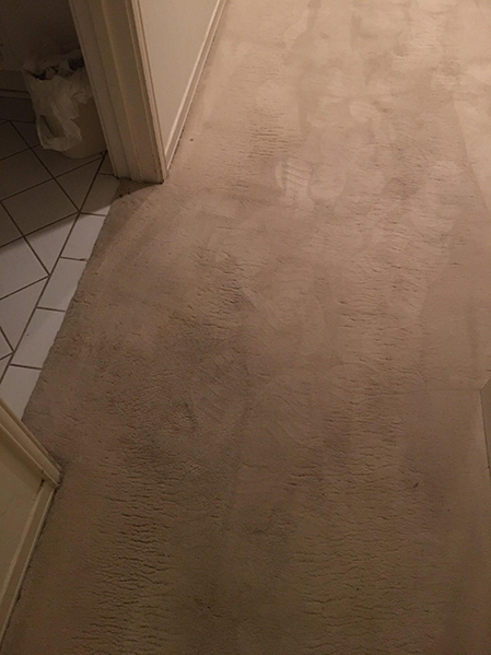 how do i remove mold from carpet?