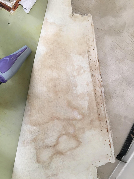 mold stains all the way through carpet